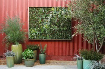 Living garden walls: succulent eco art