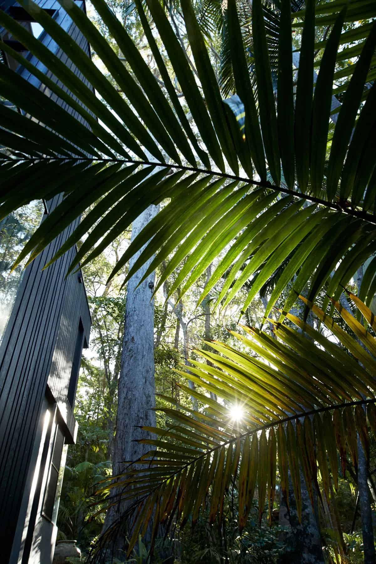 contemporary-rainforest-retreat-exterior